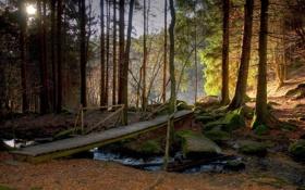 Обои лес, деревья, мост, природа, Германия, Бавария