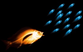 Обои вода, рыбы, рентген