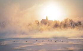 Обои зима, туман, река, утки, утро