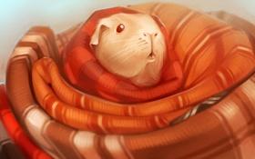 Обои арт, одеяло, морская свинка, cavy