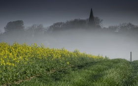 Картинка дорога, поле, туман, рапс