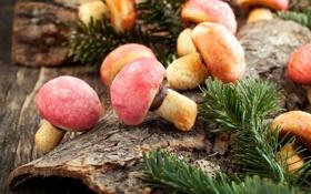 Картинка зима, ветки, грибы, еда, печенье, сладости, грибочки