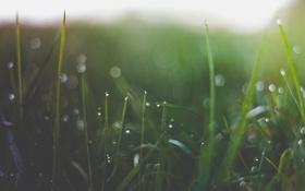 Картинка трава, капли, макро, роса, блики, утро