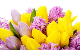 Обои цветы, тюльпаны, flowers, tulips