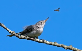 Обои небо, птица, ветка, клюв, насекомое