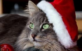 Обои кошка, взгляд, праздник