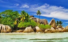 Картинка море, тропики, пальмы, скалы, кусты