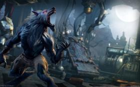 Обои волк, Оборотень, Killer Instinct, Sabrewulf