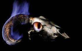 Картинка череп, фон, рога, пламя
