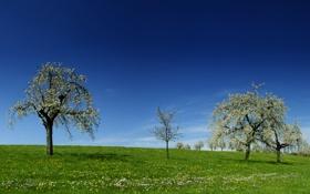 Обои трава, деревья, тепло, красота, весна, цветочки, цветение