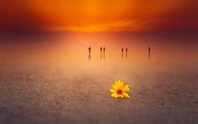 Картинка цветок, фон, цвет