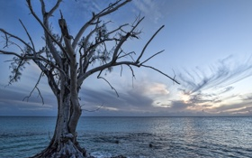Обои море, облака, закат, дерево, сухое
