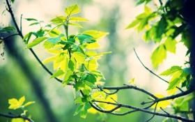 Обои лес, лето, листья, солнце, лучи, природа, фото