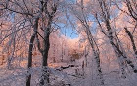 Обои зима, иней, лес, снег, деревья, ветки, природа
