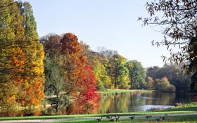 Обои небо, деревья, пейзаж, природа, озеро, утки, sky