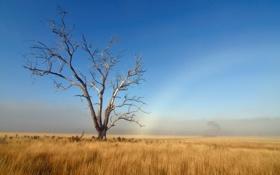 Картинка поле, осень, небо, трава, дерево, радуга