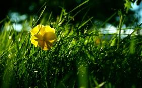 Картинка луг, трава, цветок