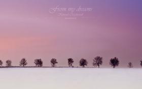 Обои зима, from my dreams, деревья