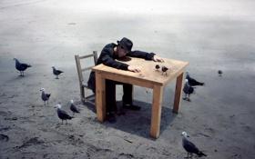 Обои птицы, стол, ситуация, парень