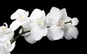 Обои цветы, ветка, лепестки