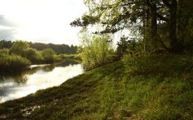 Обои лес, вода, деревья, пейзаж, природа, река, настроение