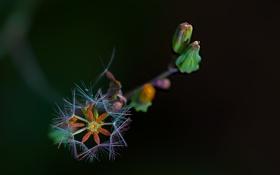 Обои цветок, природа, растение, экзотика