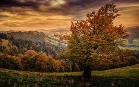 Обои лес, осень, трава, дерево, обработка, Щвейцария, холм