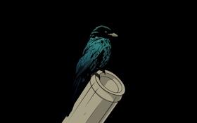 Обои фон, птица, ворона