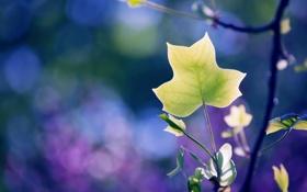 Картинка природа, лист, фон, цвет