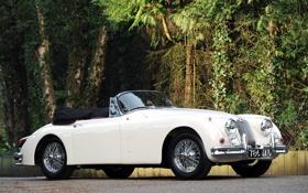 Обои белый, деревья, фон, Jaguar, Ягуар, кабриолет, кусты