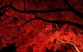 Обои осень, листья, свет, ночь, ветки, дерево, клен