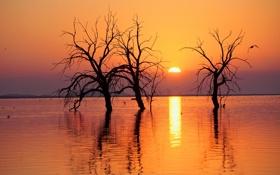 Обои солнце, деревья, пейзаж, закат, природа, река, водоём