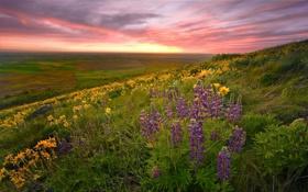 Обои поле, цветы, природа, фото, красота, весна