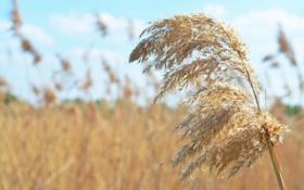 Картинка поле, макро, природа