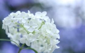 Картинка цветок, макро, природа, блики, фон, весна, лепестки