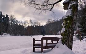 Обои зима, холод, снег, парк, лавка, дерево