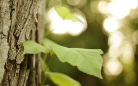 Картинка листья, макро, дерево