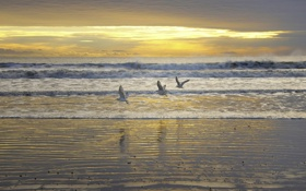 Картинка море, небо, закат, птицы