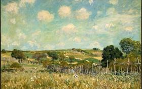 Обои лето, трава, природа, деревня