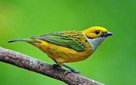 Картинка птица, цвет, ветка, перья, клюв