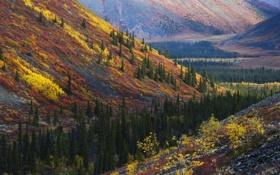 Картинка осень, лес, холмы