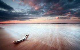 Картинка море, пейзаж, берег, бревно