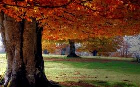 Обои осень, природа, парк, дерево