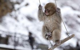 Картинка фон, качели, обезьяна