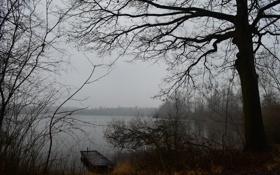 Картинка лес, осень, озеро, туман