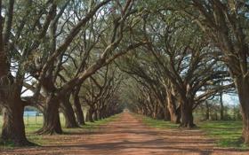 Обои дорога, деревья, ветки, природа, путь, ветви, весна