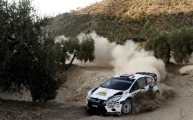 Обои Ford, Авто, Пыль, Белый, Деревья, Поворот, WRC