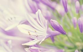 Картинка цветок, бутон, лепесток