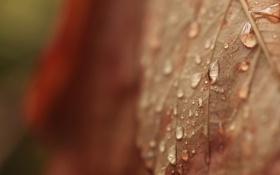 Картинка осень, капли, макро, лист, сухой, прожилки