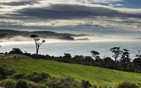 Обои landscape, Papatowai, Tahakopa Bay, ocean